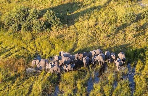 航拍非洲草原上的野生动物-中关村在线