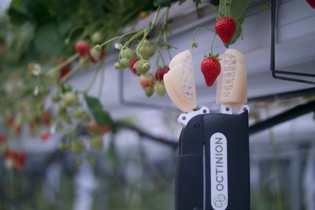 摘草莓的机器人!替懒人问问会喂饭吗